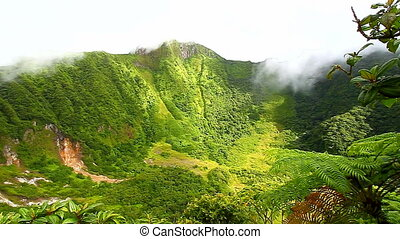 Saint Kitts Rainforest Crater - Lush rainforest near the...