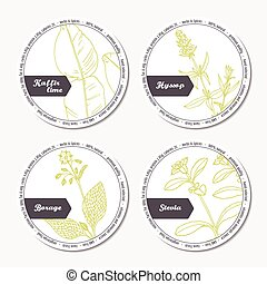 Set of stickers for package design with kaffir lime, borage,...