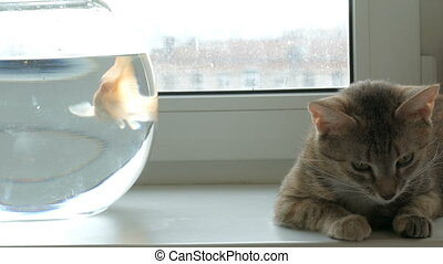 Home cat and a gold fish - Domestic cat sitting on a window...