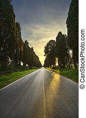 Bolgheri famous straight boulevard. Maremma, Tuscany, Italy