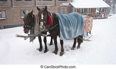 Two sorrel horses, HD