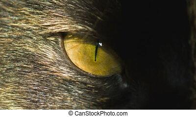 cat's eye on sun