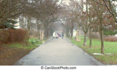 Tranquil Tree Alley During First Snow - People walking at...