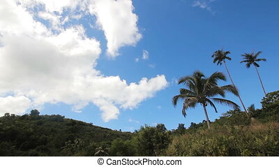 Landscape with coconut trees and mountains - Coconut palm...