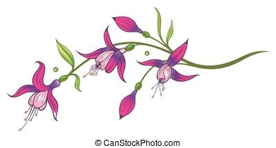 Flowers, fuchsia - Pink fuchsia, floral vector decoration