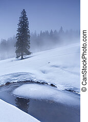 spruce tree on snow by frozen lake in winter, Stubenwasen,...