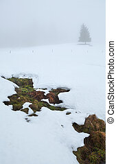 mountain spring and tree on snow in dense fog
