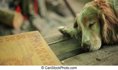 Reddish dog sleep on wooden surface. Campfire on background....