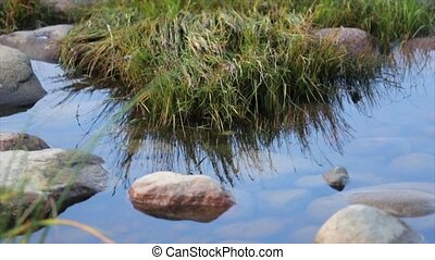 Shore with big stones and green grass. Calm water surface. Summer. Close up