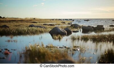 Sea shore with big stones and grass. Calm water surface. Swamp. Summer. Nobody.
