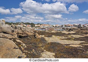 Rocks covered of seaweed - Algae covered rocks on the coast...