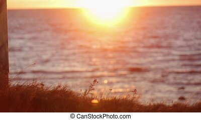 Grass on hill shakes from wind Beautiful sea sunset on...