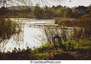 Toned shot of lake with growing high grass on shore