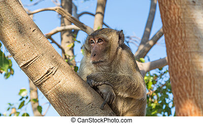 Monkey at Khao Takiab Temple in Hua Hin Thailand.