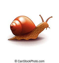 Snail isolated on white vector - Snail isolated on white...