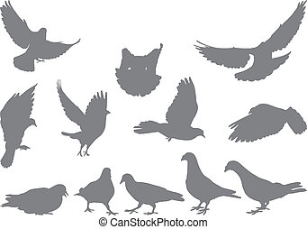 Doves vector silhouettes bird - Set of gray pigeon on white...