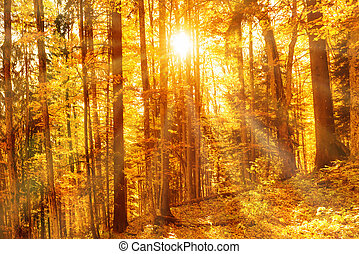 Morning in the autumn forest. Orange fallen leaves and sun...
