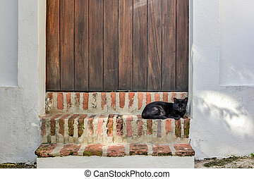 Cat of Old San Juan, Puerto Rico - Cat on the streets of Old...