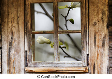 Old wooden window frame, spring, flowering trees. - Wooden...