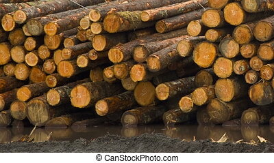 Lumber Mill Log Pile Wood Tree Trunks Waiting for Processing...