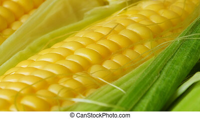 Corn cob - Macro of the corn cob , shallow DOF photo