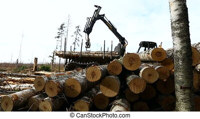 View on timber loader working in forest - View on modern...
