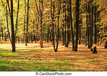 trees in gold fall at september