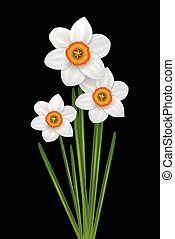 Flowers narcissus illustration - Flowers narcissus bouquet,...