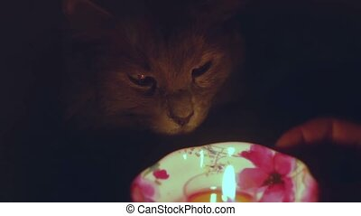 Cat looking at candle fire toned