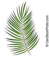 Palm Leaf Vector Background Illustration - Palm Leaf Vector...