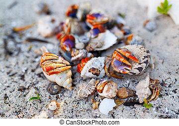 Hermit crabs on white sand beach