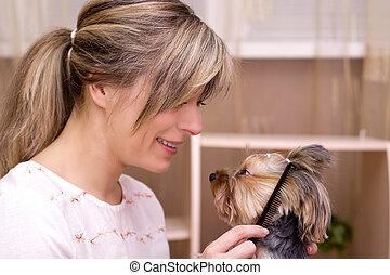 Combing beard of Yorkshire Terrier - Dog grooming Combing...