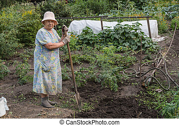 The gardener - An elderly woman gardener in his garden