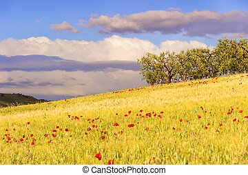 Hilly landscape with cornfields.
