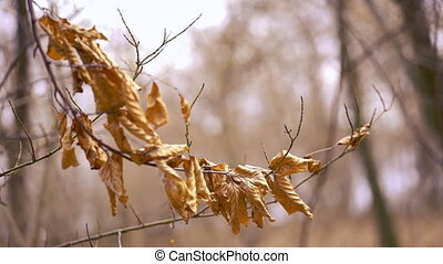 macro photo of a fallen leaves in autumn forest, shallow dof...