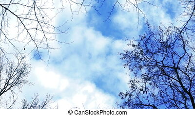 Blue sky in the winter woods. Taymlaps. Full HD