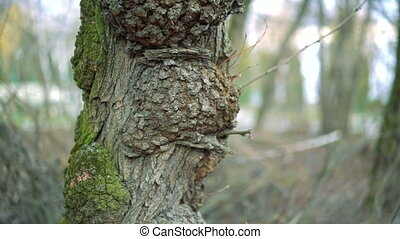 Interesting tree in the forest
