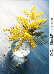 Mimosa - Bouquet of mimosa silver wattle in vase on wooden...