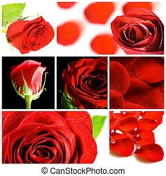 collage, rose, vario, rosso