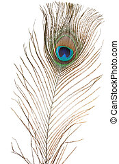 Peacock feather - Macro of peacock feather isolated on white