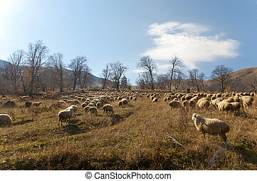 Green Meadows and Sheeps ,Deep forest in Bakuriani...