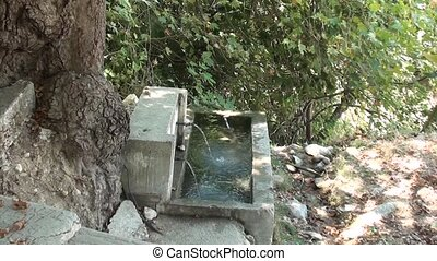 Watertrough in forest