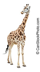 Giraffe half-turn looking cutout - Giraffe half-turn looking...
