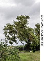 Balaton - view of a tree at lake Balaton on a windy day