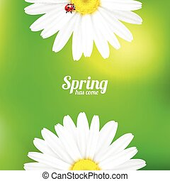 Spring flowers composition. - Bright spring background...