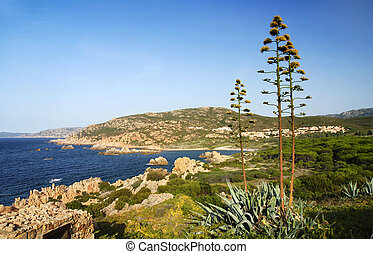 Sardinia shore and agave - Beautiful Sardinian sea landscape...