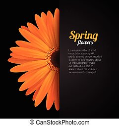 Spring flower in paper pocket - Spring season background...