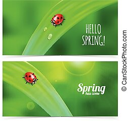 Ladybug on green grass - Bright spring banners design Vector...