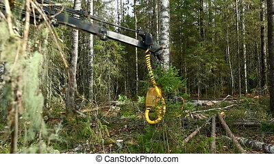 Timber harvesting View on work logger in woods - Timber...