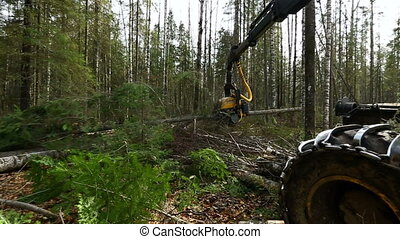 View on modern logger processing tree - Woodworking View on...
